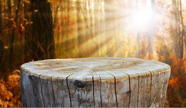 wooden like stones